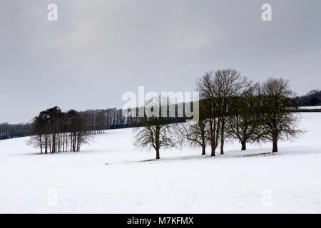 Los Downs en la nieve, Chartham, Canterbury, Kent