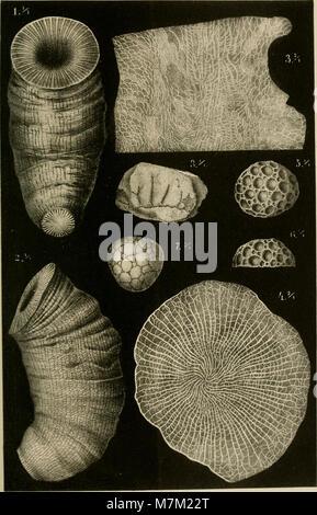Geologischen Abhandlungen zur Specialkarte von Preussen und den Thüringischen Staaten (1885) (16561540697)