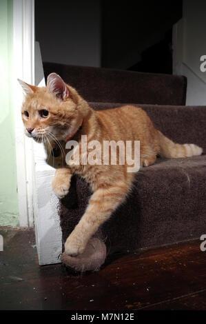 Jengibre gato jugando en las escaleras