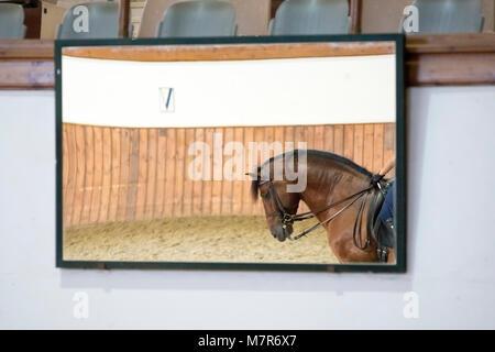Bay caballo español pura reflejada en un espejo. La doma en Jerez.