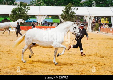 Córdoba, Andalucía, España : jinetes y thoroughbreeds andaluz en la Feria del Caballo de Córdoba.