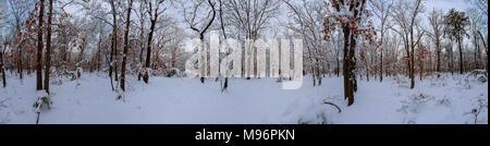 Majestuosos abetos blancos iluminado por la luz solar. Hermosa y pintoresca escena invernal. Lugar de ubicación del parque nacional de los Cárpatos, Ucrania, Europa. Esquí Alpes