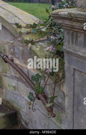 Ivy subiendo a lo largo de una vieja pared y mango de metal
