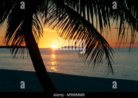 Palmera en la playa al anochecer, Tikehau Atolón Archipiélago Tuamotu, Islas Sociedad, Polinesia Francesa, las Islas de Barlovento