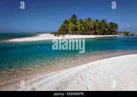 Isla Desierta, playa con palmeras, Tikehau Atolón Archipiélago Tuamotu, Islas Sociedad, Polinesia Francesa, las Islas de Barlovento