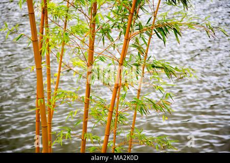Un stand de bambú en frente de uno de los muchos estanques en el jardín de Edén de Buda con 35 hectáreas (86 acres) de los campos naturales, lagos, jardines cuidados un