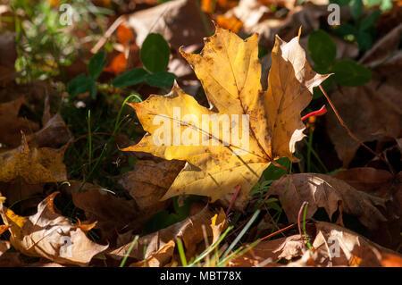 Hojas de otoño sobre la tierra durante el otoño en Östergötland, Suecia