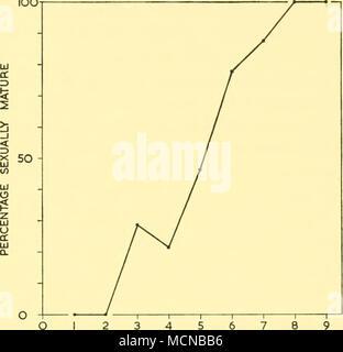 . Longitud en pies Text-Fig. 33. Suavizan las frecuencias de longitud de sexualmente inmaduros y las hembras sexualmente maduras. 2 3 4 5 6 7 8 AÑOS DE Ear Plug (años) Texto-Fig. 34. Porcentaje de las hembras sexualmente maduras en sucesivos grupos de edad. como una distribución de frecuencia normal, con un valor medio que corresponde a la duración media en la pubertad, la media es de 65-41 pies. (Desviación estándar 2-07, 0-16 de error estándar). Esto está en estrecho acuerdo con el valor del punto de intersección de las curvas. La longitud promedio en la pubertad, por lo tanto, es tomado a 65-25 ft. La muestra más grande ha ampliado la gama de solapamiento por un