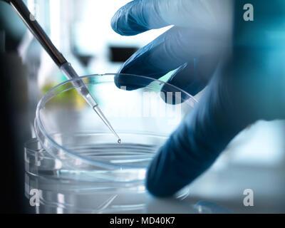Pipeteo científico muestra en placa de Petri en el laboratorio