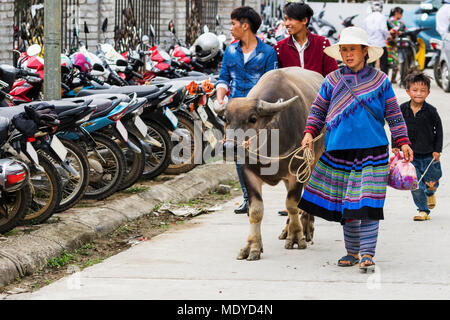 Mujer Hmong y búfalos de agua en el mercado dominical; Bac Ha, Lao Cai, Vietnam