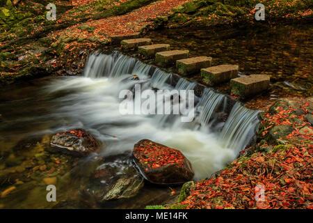 La conocida Stepping Stones cruzando el río Shimna en Tollymore Park, Condado de Down, Irlanda, en otoño.