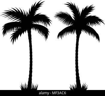 Palmeras tropicales. Siluetas vectoriales aislado sobre fondo blanco. Ilustración dibujada a mano de palmeras.