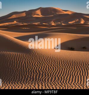Mar de arena, dunas de Erg Chebbi : Desierto, el Sáhara Occidental, Marruecos