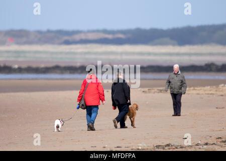 Crosby, Merseyside. El 25 de abril de 2018. Un fresco y refrescante para empezar el día en el noroeste de Inglaterra como un perro walker ejerce sus queridas mascotas en la playa de Crosby beach en Merseyside. Crédito: Cernan Elias/Alamy Live News