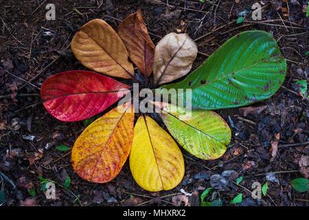 Otoño Maple Leaf y variación del concepto de transición para el otoño y el cambio de la estación