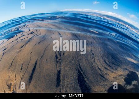 Trichodesmium, también llamado mar serrín (Trichodesmium erythraeum). Aparece masivamente en superficie, tiempo de calor. Es un proceso natural. Tenerife, Islas Canarias.