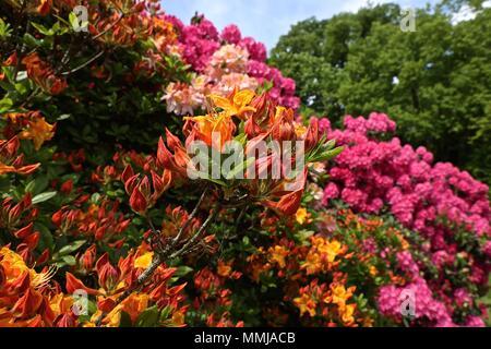 Hampstead Heath jardín de flores de Mayo 2018