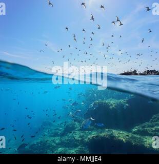 Las aves marinas (gaviotas mediterráneas ) volando en el cielo y un cardumen de peces con rocas submarinas, Mar Vista dividida por encima y por debajo de la superficie del agua, España