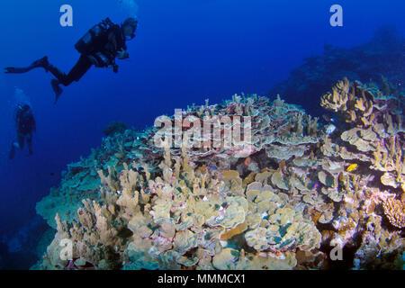 Los buceadores exploran prístina un arrecife de coral en la isla de Wallis, Wallis y Futuna, Pacífico Sur
