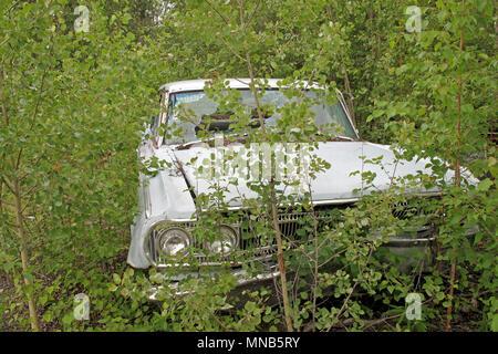 Automóvil en american forest, Alaska