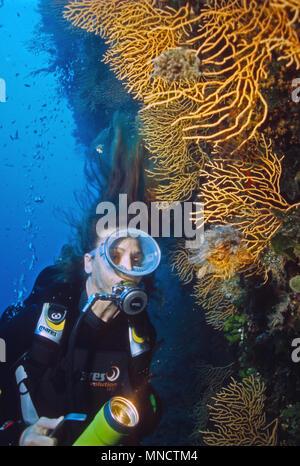 Diver y amarillo Ventilador gorgonia coral en el Mar Mediterráneo | Taucherin mit Mittelmeer Fächerkoralle / Gelbe Gorgonien (Eunicella cavolinii)