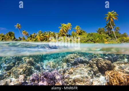 Isla Tropical por encima y debajo del agua