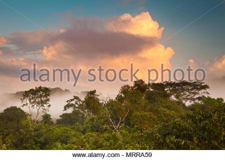 Hermoso amanecer en la selva del Parque nacional Soberanía, República de Panamá. Foto de stock