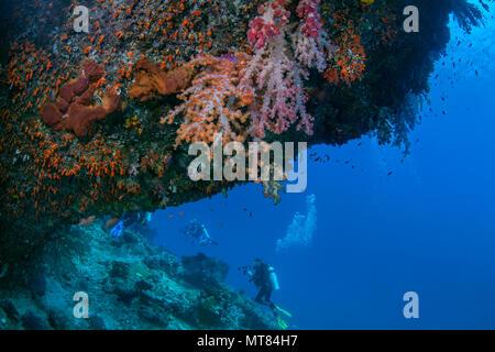 Los submarinistas exploran pared de coral con corales blandos en cornisa en primer plano. Raja Ampat, Indonesia.