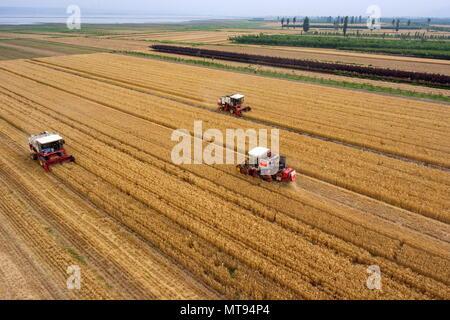 Yuncheng, la Provincia china de Shanxi. 29 Mayo, 2018. Los recolectores recogen en los campos de trigo en Yuncheng, en el norte de la Provincia china de Shanxi, 29 de mayo de 2018. Crédito: Cao Yang/Xinhua/Alamy Live News Foto de stock
