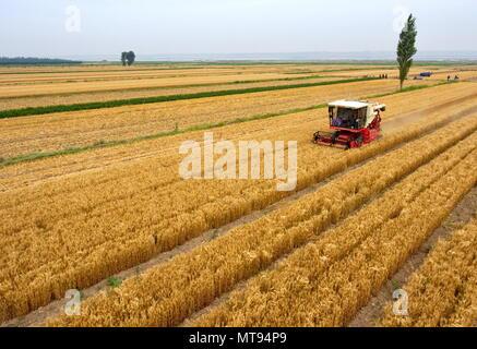 Yuncheng, la Provincia china de Shanxi. 29 Mayo, 2018. Una cosechadora recoge en los campos de trigo en Yuncheng, en el norte de la Provincia china de Shanxi, 29 de mayo de 2018. Crédito: Cao Yang/Xinhua/Alamy Live News Foto de stock
