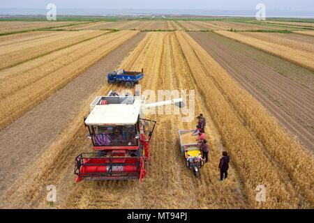 Yuncheng, la Provincia china de Shanxi. 29 Mayo, 2018. Los agricultores recogen el trigo en los campos de Yuncheng, en el norte de la Provincia china de Shanxi, 29 de mayo de 2018. Crédito: Cao Yang/Xinhua/Alamy Live News Foto de stock