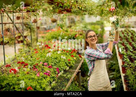 Bastante joven que trabaja con flores de primavera en invernadero