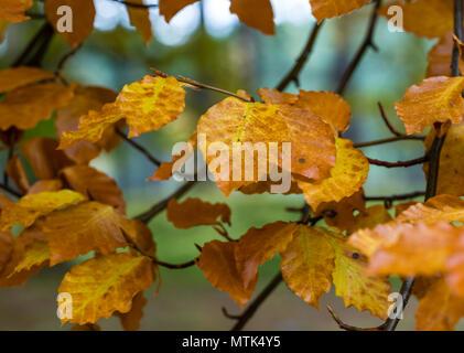 Golpear las maderas para los picos de color en el otoño es uno de mis pasatiempos favoritos