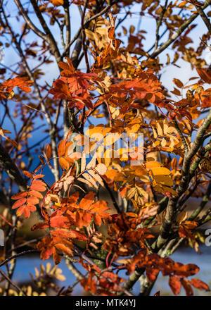 Los colores de otoño estaban en su máxima perfección cuando vinimos de nuestra visita