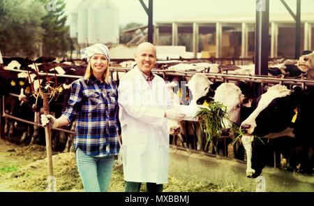 Retrato de dos trabajadores veterinarios que trabajan con vacas en cowhouse lechoso al aire libre
