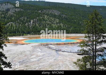 Cola en el Grand Prismatic Spring, el Parque Nacional Yellowstone, Wyoming