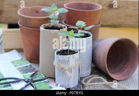 Jardinería libre de plástico. Antiguas ollas de arcilla, madera y bandejas de semillas de papel casero ollas de plantas utilizadas para reducir el uso de plástico en el jardín, Inglaterra, Reino Unido