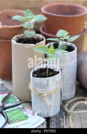 Antiguas ollas de arcilla, madera y bandejas de semillas hechas en casa de papel biodegradables macetas con plantas jóvenes utilizados para reducir el plástico en el jardín, Inglaterra, Reino Unido.