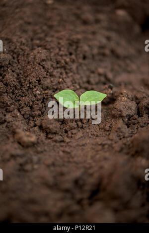 Una planta joven en un suelo sucio.