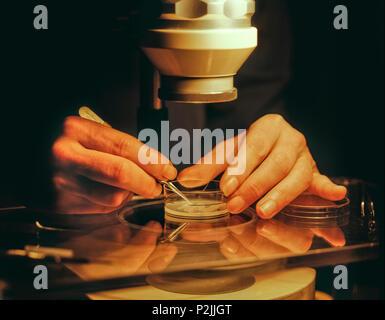 Un científico que utiliza un microscopio de bajo poder estudiar ...