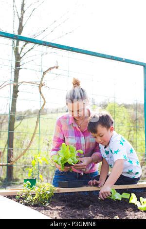 Hermosa madre y su hijo rubia ensalada de siembra en la cama levantada en su jardín