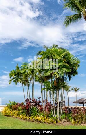 Palmeras y otra vegetación exótica contra un cielo azul en la isla de Borneo, Malasia