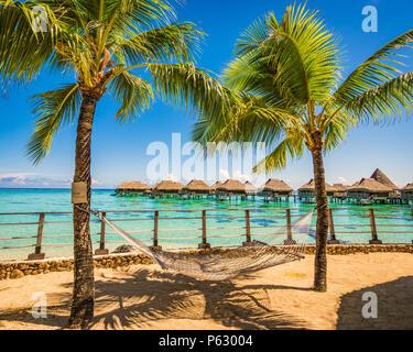 Hamaca entre palmeras en la playa de vacaciones tropicales de verano.