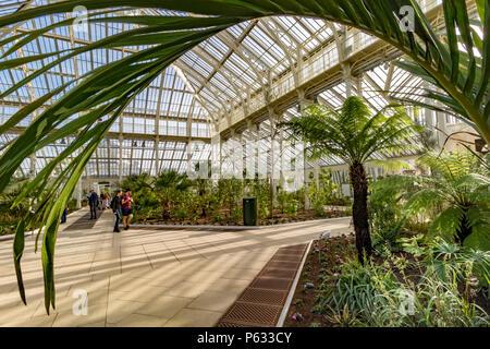 La gente que visita los Jardines de Kew en la recién restaurada casa templada que ya reabrió sus puertas a los visitantes después de un proyecto de restauración de 5 años, en mayo de 2018