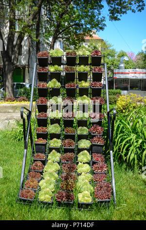 Decoración vertical con plantas suculentas en potes, verde, marrón y patrón de plantas suculentas
