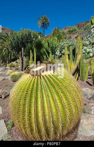 Jardín de Cactus en el Parque Palmitos