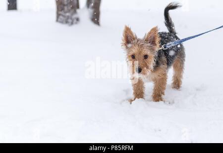 Cachorro caminar en la nieve.