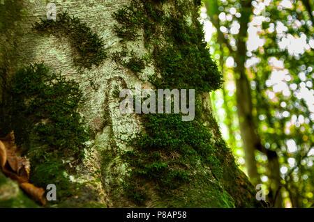 Moss en el árbol en el bosque