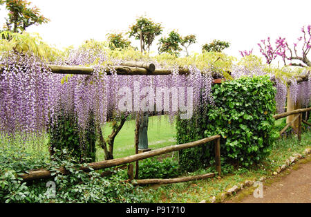 Arco de jardín con flores colgantes en Villa Cimbrone, La Costa de Amalfi, Ravello, Italia