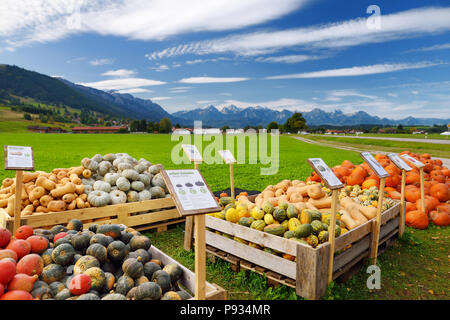 Naranja decorativos calabazas en la exhibición en el mercado de granjeros en Alemania. Amarillo-verde a rayas calabazas ornamentales sobre pedestales de self-service en Baviera. Ha